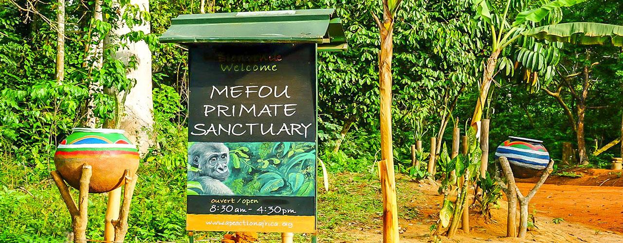 Le parc national de la Mefou