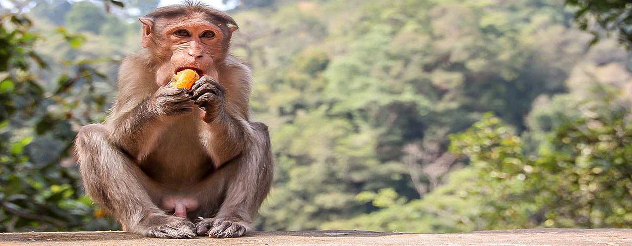 Primates du parc national