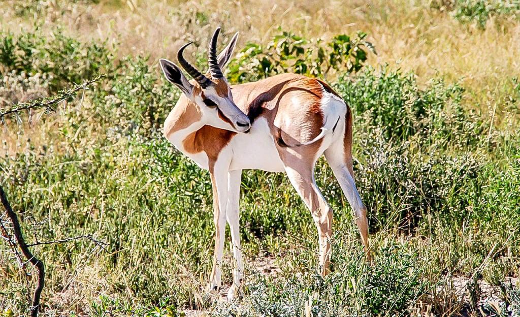 Parc national du Cameroun