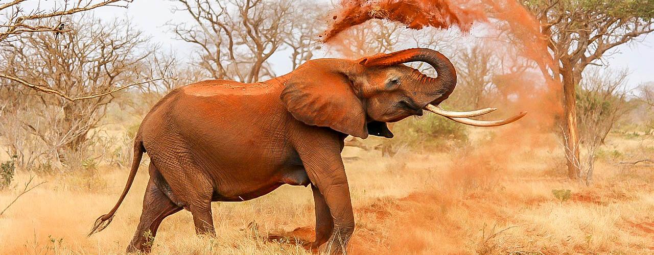 Elephant des parcs nationaux du Cameroun