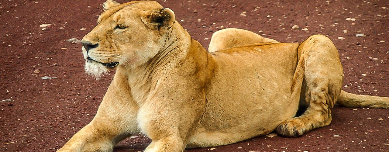 safari au cameroun