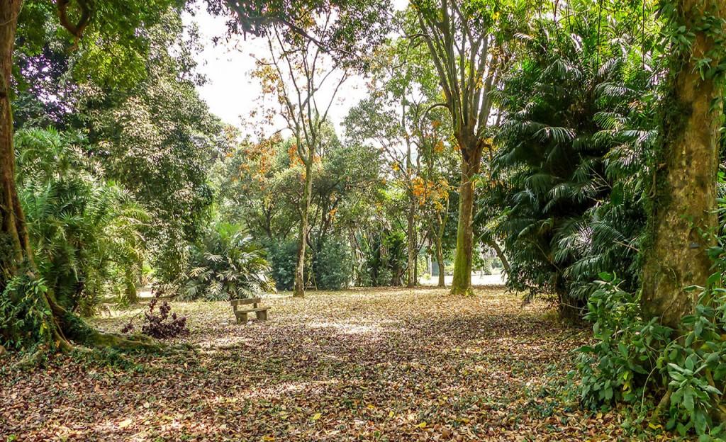 les beaux Jardins du Cameroun
