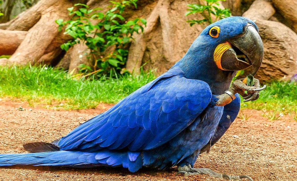 Parc du Cameroun