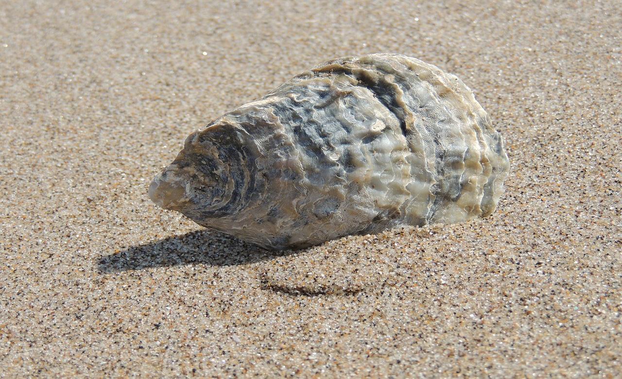 coquillage plage au Cameroun