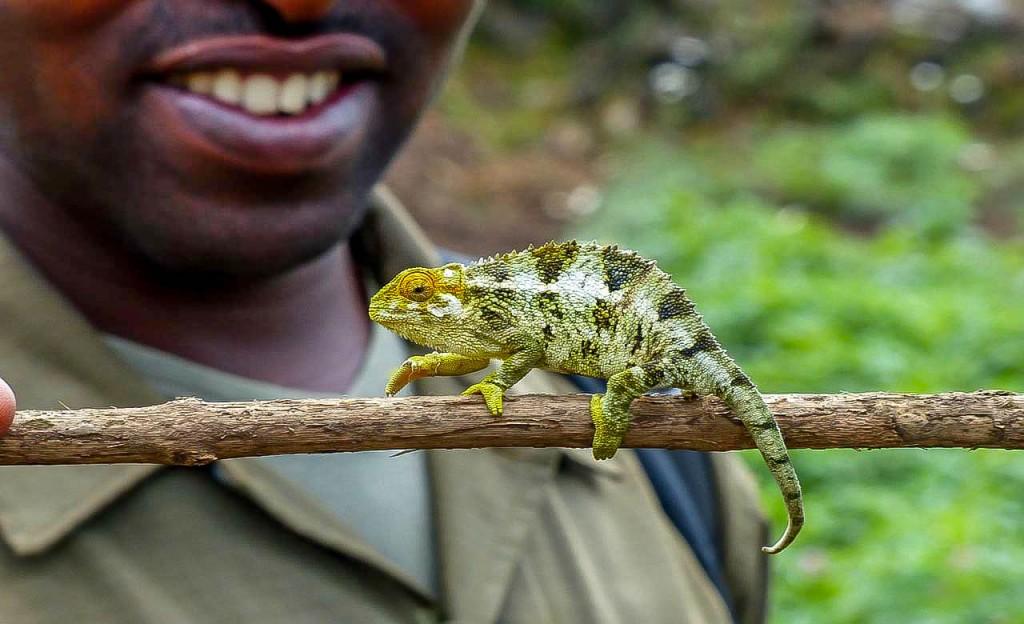Reserve Douala-Edea