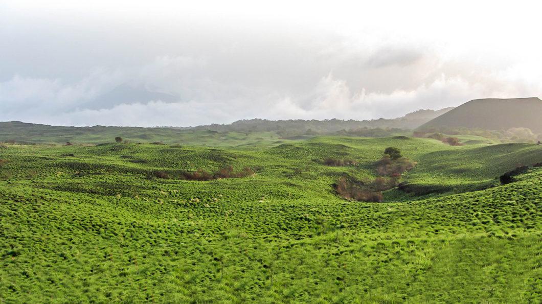 Le mont Cameroun
