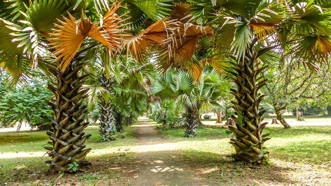Jardin Botanique de Limbe