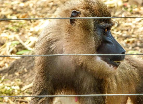 Limbe Wildlife Center